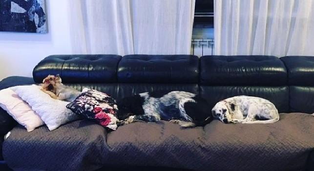 Hamsik torna a casa ma non può rilassarsi, divano occupato dai suoi tre cani [FOTO]
